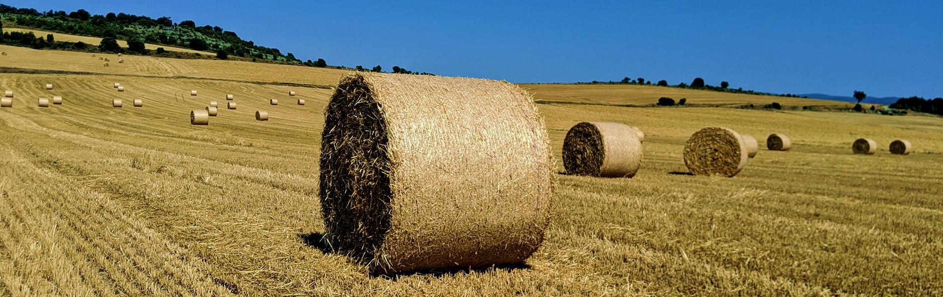 campo-cereal-con-bolas
